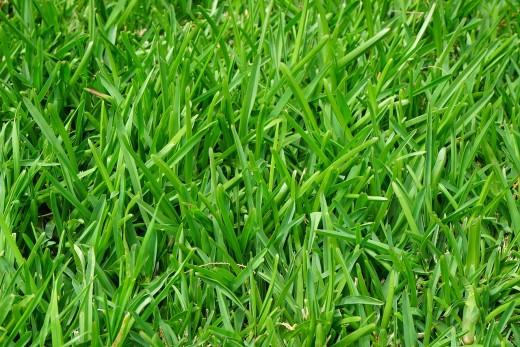 grass-375586_1280
